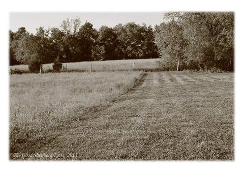 Pasture  mowing / bushogging