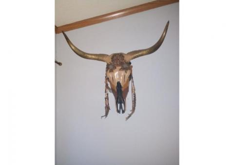 Real cow skull decorated