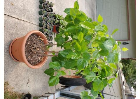 Free houseplants